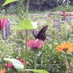 Butterflies abound in the gardens