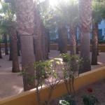 Jardines de la piscina