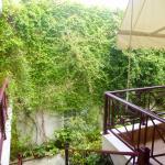 Aristea garden