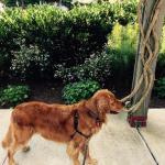 Dog friendly outdoor garden