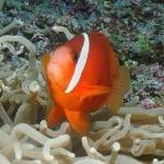 Especies marinas de la región!