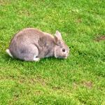 Conejo alrededor de la piscina