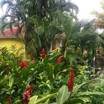 Le jardin tropical