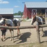 K&K Equestrian Center Foto