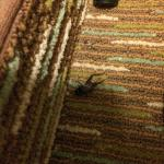 Dead cricket in closet!