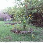 Photo of Il Giardino di Gust'e