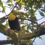 toucan, taken thru the guide`s scope