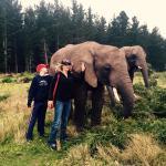 Knysna Elephant Park Lodge Foto