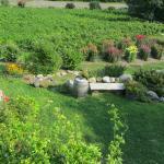 Winery Garden 1