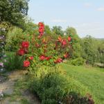 Winery Garden 2
