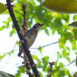 Tropical bird in Tiramisu House's surrounding garden