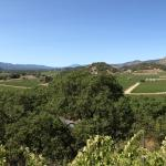 The view from Silverado Vineyards