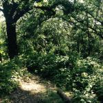 Wooded area in trails