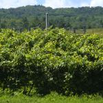 Boyden Valley Winery Foto
