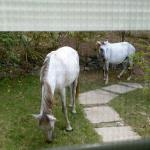Horses outside our window