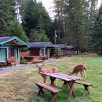 Exterior of cabins...and the welcoming committee