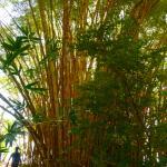 Photo of Solo Bueno Tours day tours