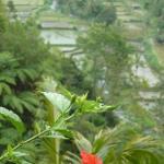 Photo de Mahagiri Panoramic Resort & Restaurant