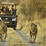 Big 5 safaris on the reserve