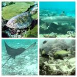 Wonderful Reef spot