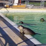 Alcuni scatti nel percorso di riabilitazione per foche