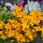 Freshly picked flowers at stall at market