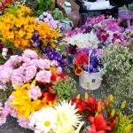 Mixed floral bouquets for sale at market