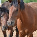 Rescued horses at the Tamaya