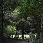 Footpath to Aston Cantlow