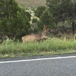 Ridgway State Park Foto
