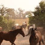 Photo de Macatoo Horseback Safari Camp