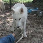 Seacrest Wolf Preserve Foto