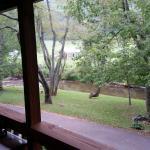 Photo de Mountain Springs Cabins