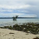 Sea Beach at Low Tide