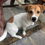 Ken, the adorable pup