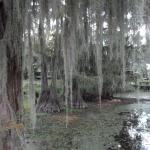 Haunting beauty of Caddo Lake from Spatterdock pier