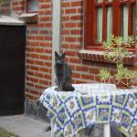 La gatita de las cabañas y la mesita del patio