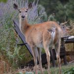 front yard wildlife