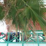 Balkon unter Palmen