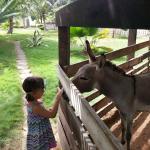 A very friendly donkey