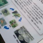 揚羽蝶は姫路城にも使用されてた!