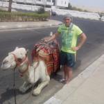 египетская корова