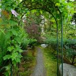 Deer Fern Garden Path