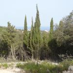 The Cypress Trail