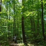 Sapsucker Woods Foto