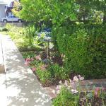 Foxes Inn Garden