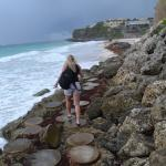 Stepping stones to access the beach
