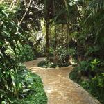 T=One of the walking paths through the hotel gardens