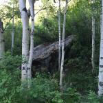 Creek Access Behind Site #4