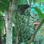 big owl eye
